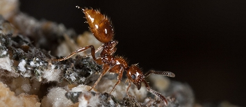 Photograph of ant